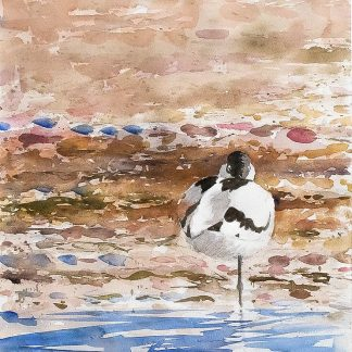 Birdpainting watercolour avocet