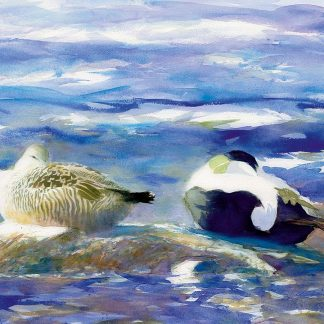 Fågelmålning ejder, vykort