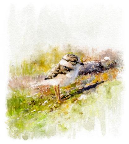 Fågelmålning grafik, unge