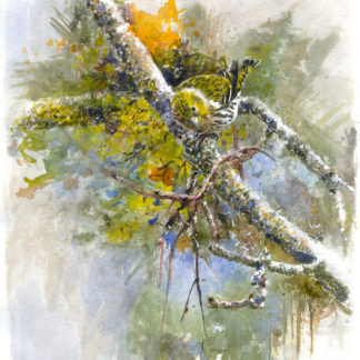 Fågelmålning akvarell Grönsiska.