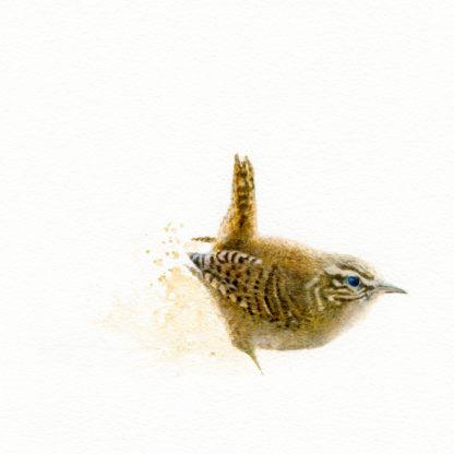 Fågelmålning Gärdsmyg